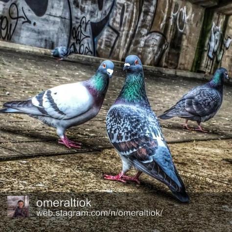 Ömer Altıok - Photography